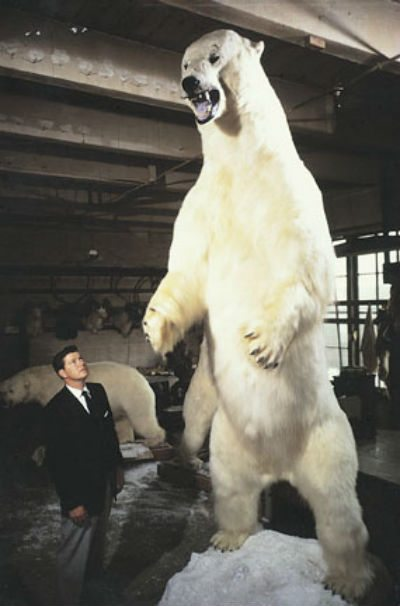 largest taxidermist bear