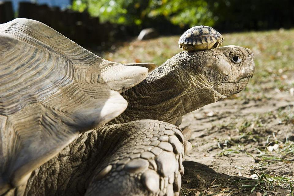140-Year-Old Tortoise with 5-Day-Old Baby Tortoise