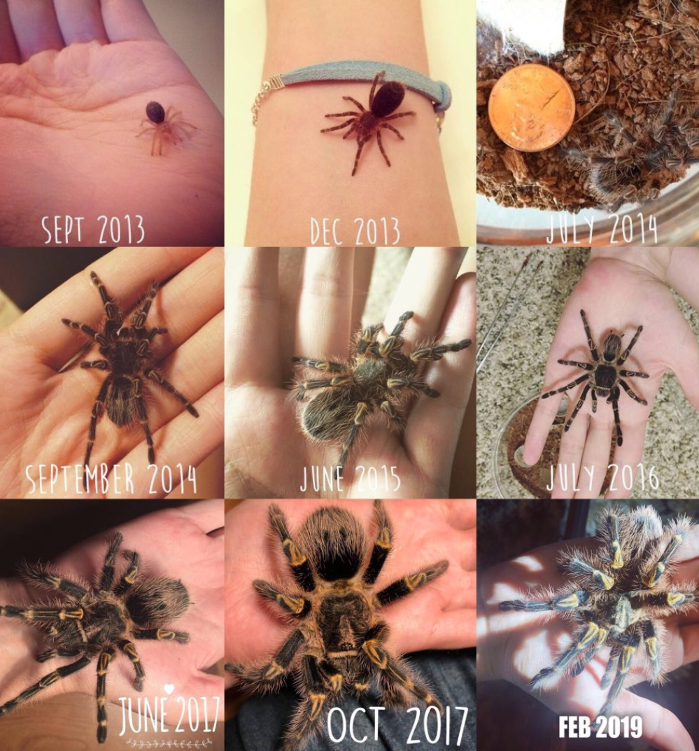 A spiders journey to adulthood